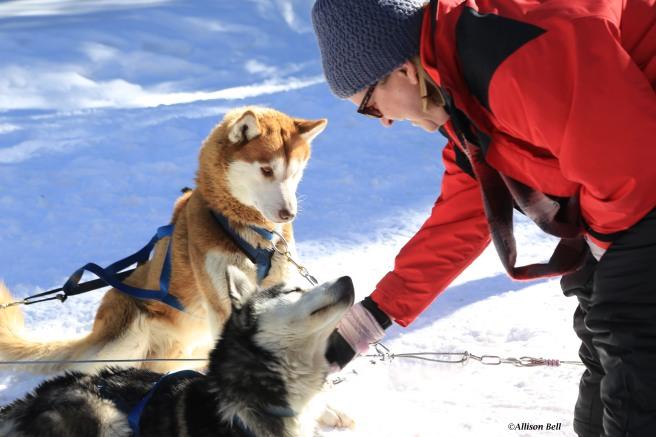 Jill petting the dog