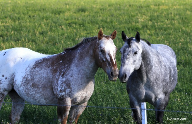 nuzzling-horses-7665